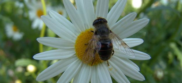Blog ADNartesano - Propiedades de la miel de abeja