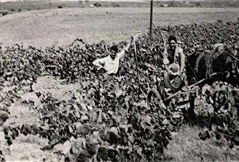 ADNartesano - Alsina&Sarda - Historia