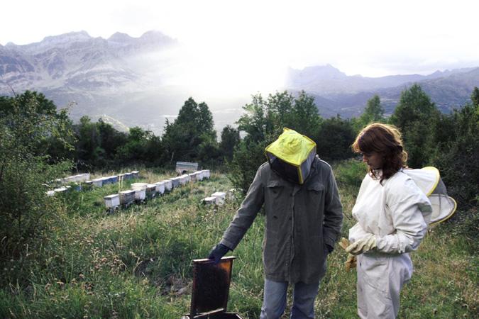 ADNartesano - Miel del Pirineo - Recolección